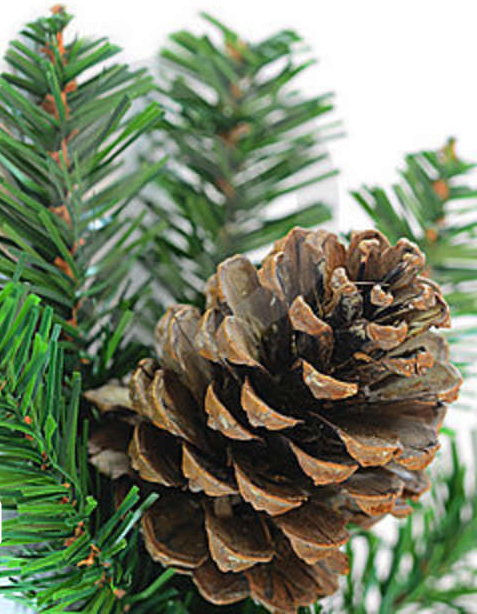 pine-cone-branch-21419288_3